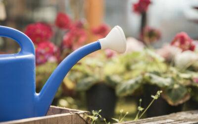 Les 4 bienfaits méconnus du jardinage